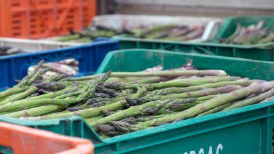 Krispig och färsk förväntar vi oss att hitta sparris i livsmedelsbutikerna året om. Den svenska odlingssäsongen är dock kort och resten av året importeras grönsaken, bland annat från södra Peru där den storskaliga exportproduktionen har skapat akut vattenbrist.