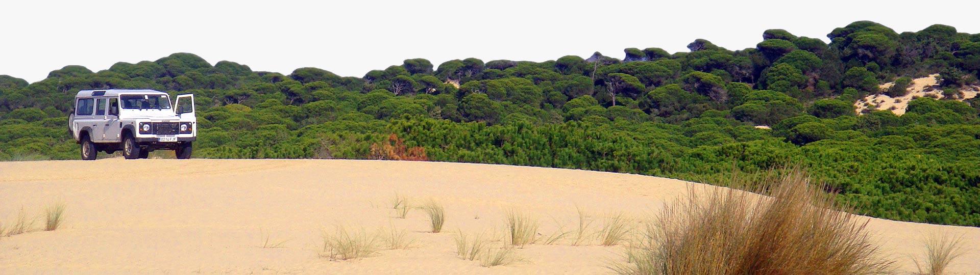 Doñana nationalpark (Huelva, Andalusien)