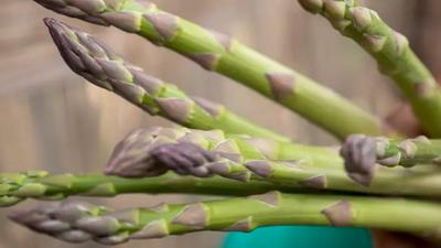 Till ett kilo sparris går det åt runt 1000 liter vatten. Den storskaliga odlingen av exportgrönsaker tömmer Ica-området i södra Peru på grundvatten. Vattenbristen är akut och slår hårt mot lokalbefolkningens hälsa och försörjning. Foto: Diakonia