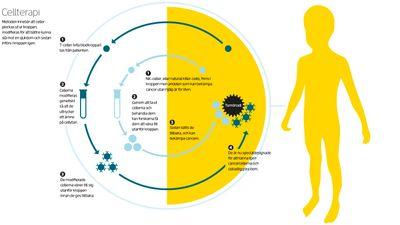 Cellterapi. Illustration: Erik Nylund