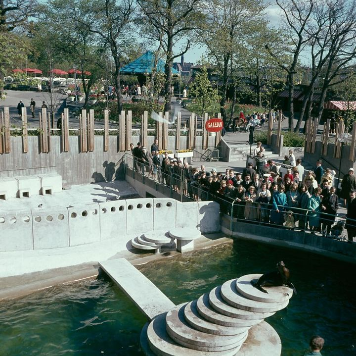 The then-modern sea lion terrace, photographed on 29 May 1965. Photo: Ingemar Gram (1908-1986), Stockholmskällan, Stockholm City Museum. Photo number DIA 13614 CC-BY